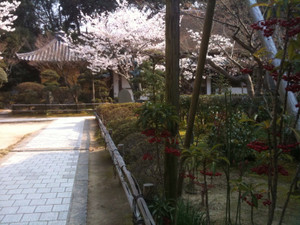 Sakura3_20120409_3