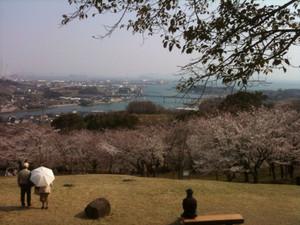 Sakura4_20120409_2