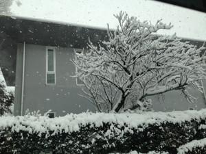 Toyama_snow_140310_1