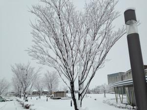 Toyama_snow_140310_3_5