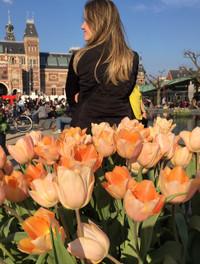 Ams_2016apr_tulip